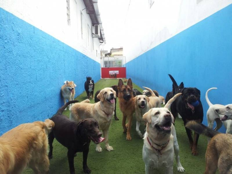 Creche Day Care em SP na Vila Monte Alegre - Day Care para Cachorro
