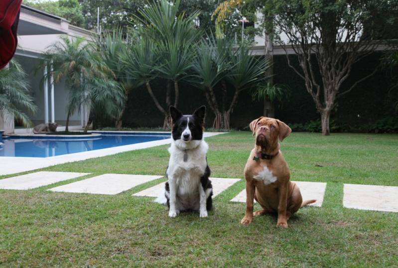 Creche Day Care no Jardim Lusitânia - Dog Resort