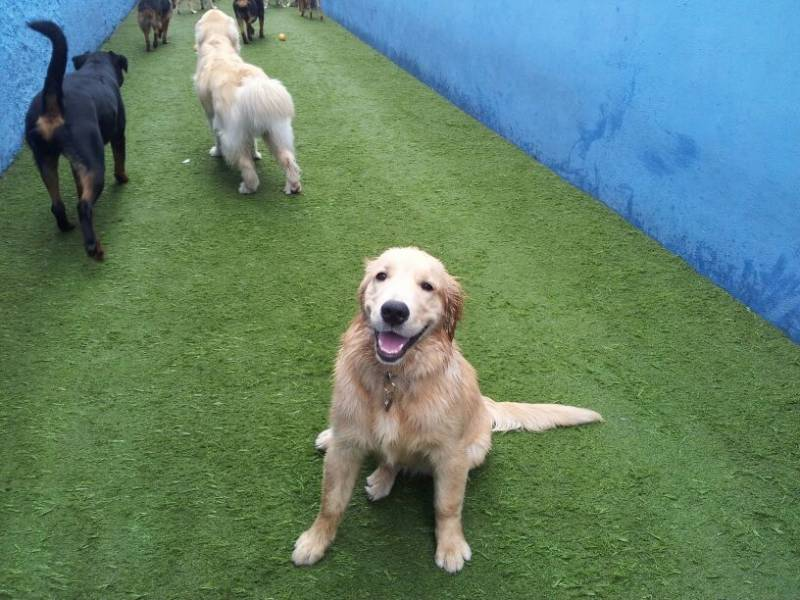 Day Care Cachorro SP no Brooklin Paulista - Hotel Canino