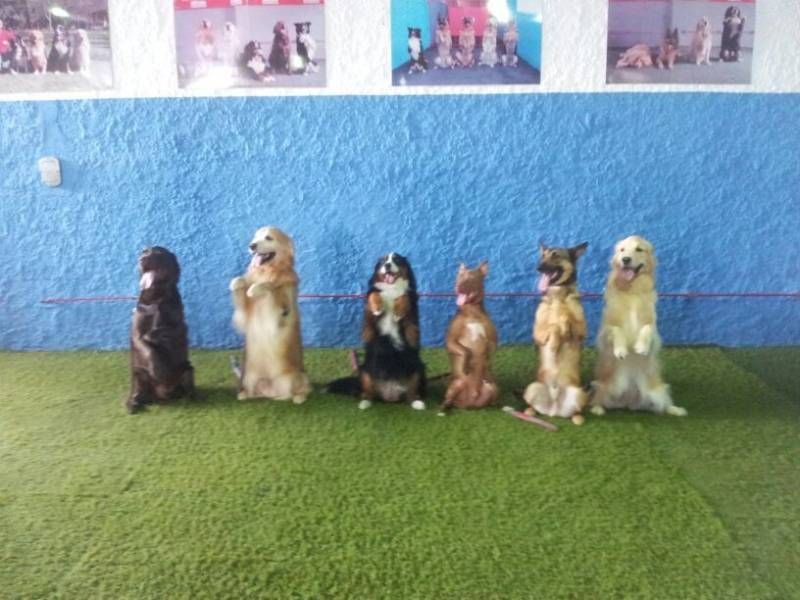 Day Care Cachorro SP no Ibirapuera - Day Care para Animais