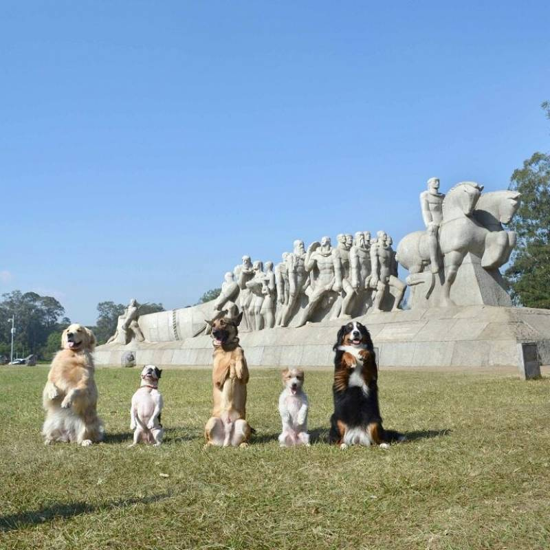 Day Care Canino na Vila Congonhas - Day Care para Animais