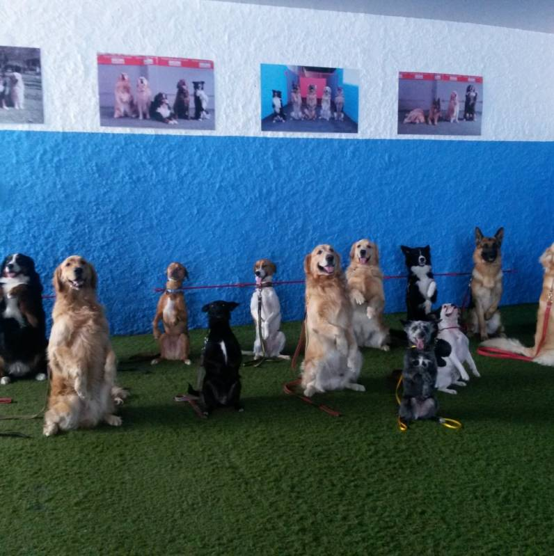 Day Care Preço no Jardins - Day Care Canino