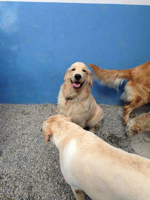 Onde Encontrar Creche Day Care 46691 no Aeroporto - Dog Resort