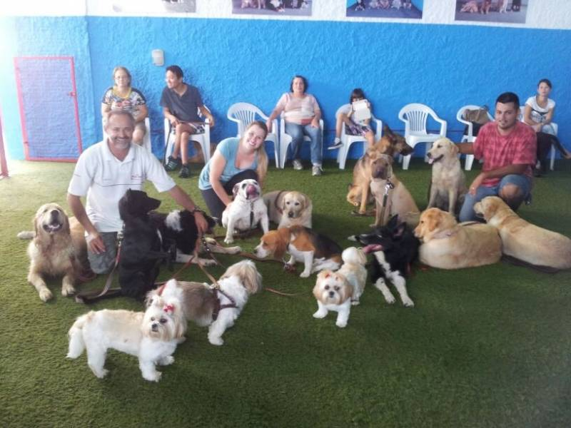 Onde Encontrar Creche Day Care na Chácara Inglesa - Day Care Canino