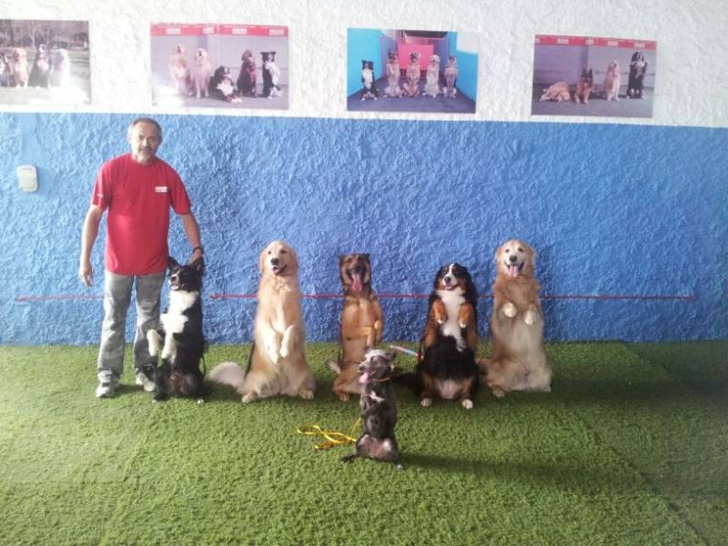 Onde Encontrar Day Care Canino no Jardim Ceci - Dog Resort
