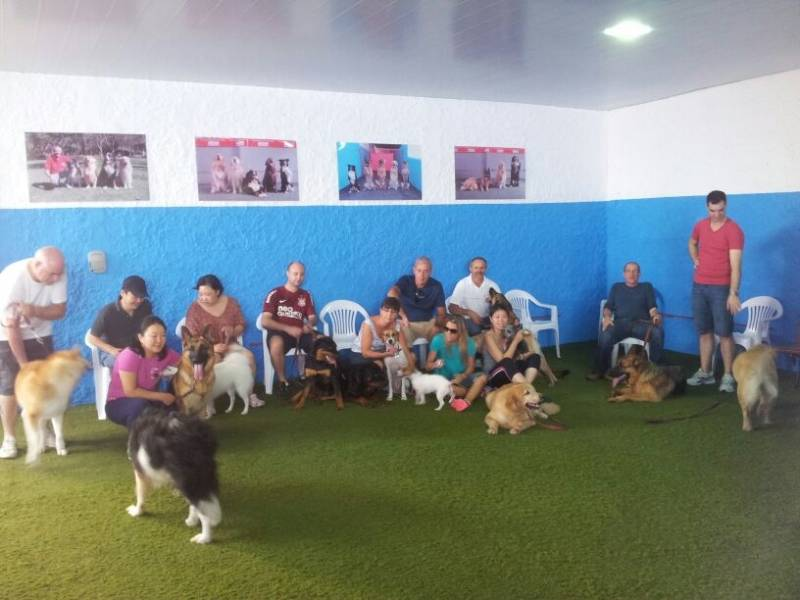 Onde Encontrar Day Care na Vila Nova Conceição - Spa Canino