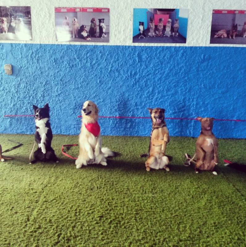 Quanto Custa Day Care Canino no Jardins - Day Care em SP