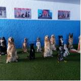 day care canino no Campo Belo