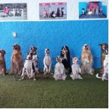 day care de cães na Vila Helena