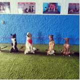 quanto custa day care canino no Jardins